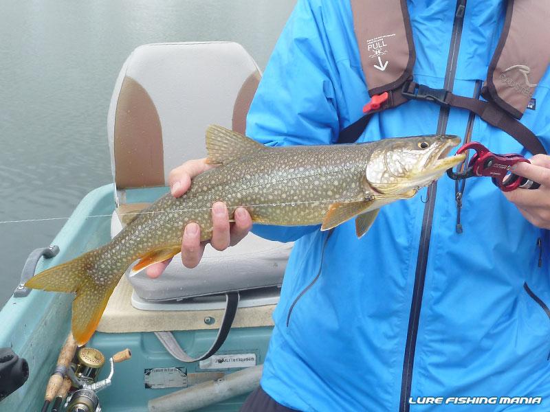 10分後にも同じ釣り方でバイトしてきた42cmのレイクトラウト
