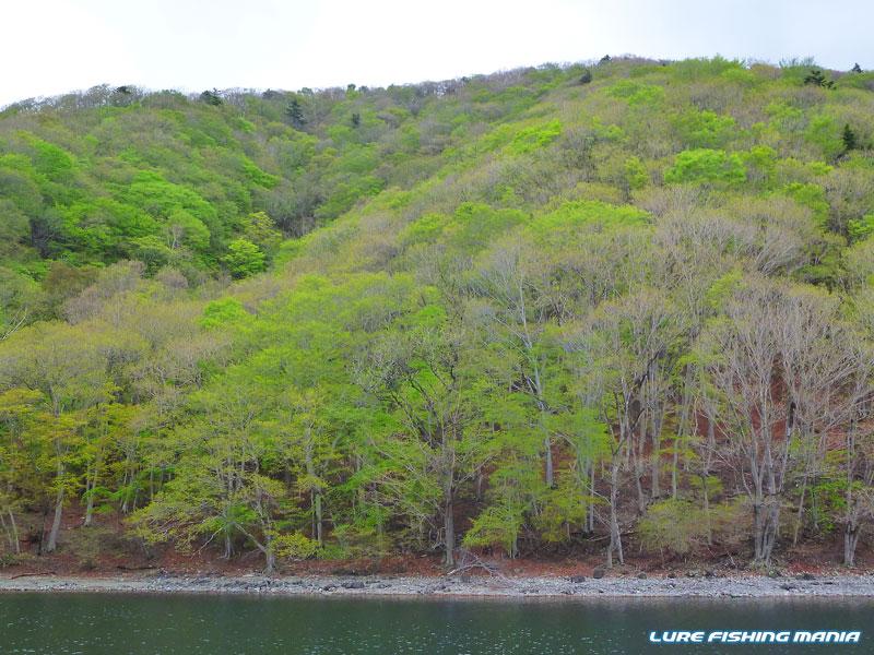 木々が段々緑に包まれてきましたね