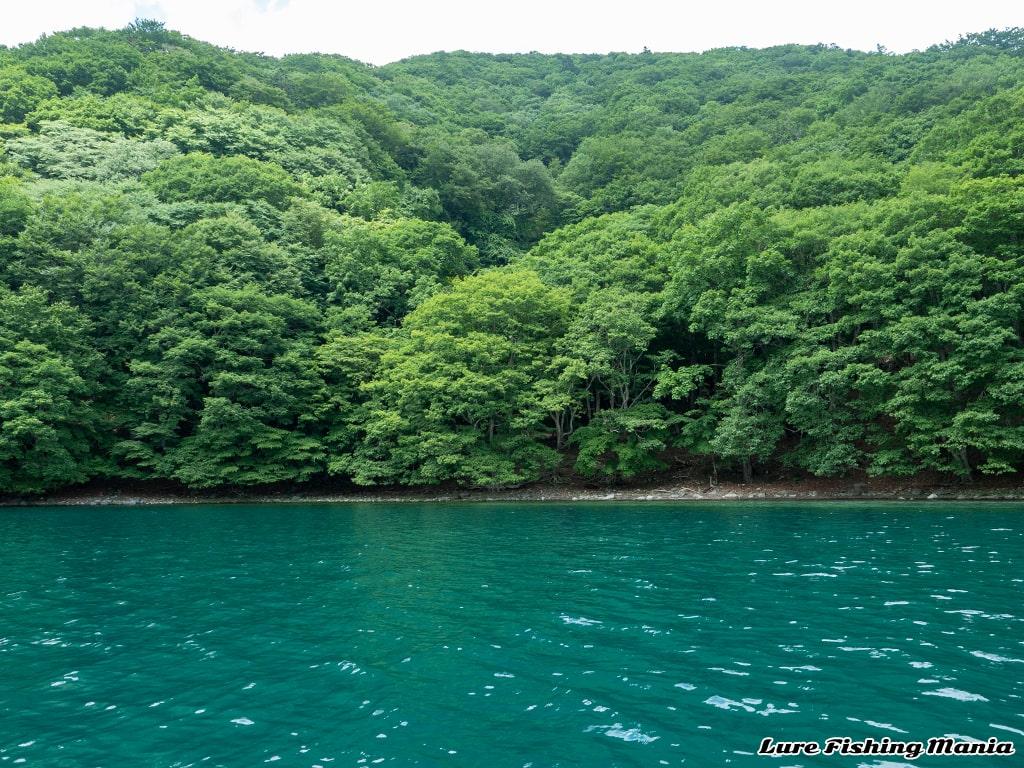 水量も増えてきて緑が生い茂り、夏の様相